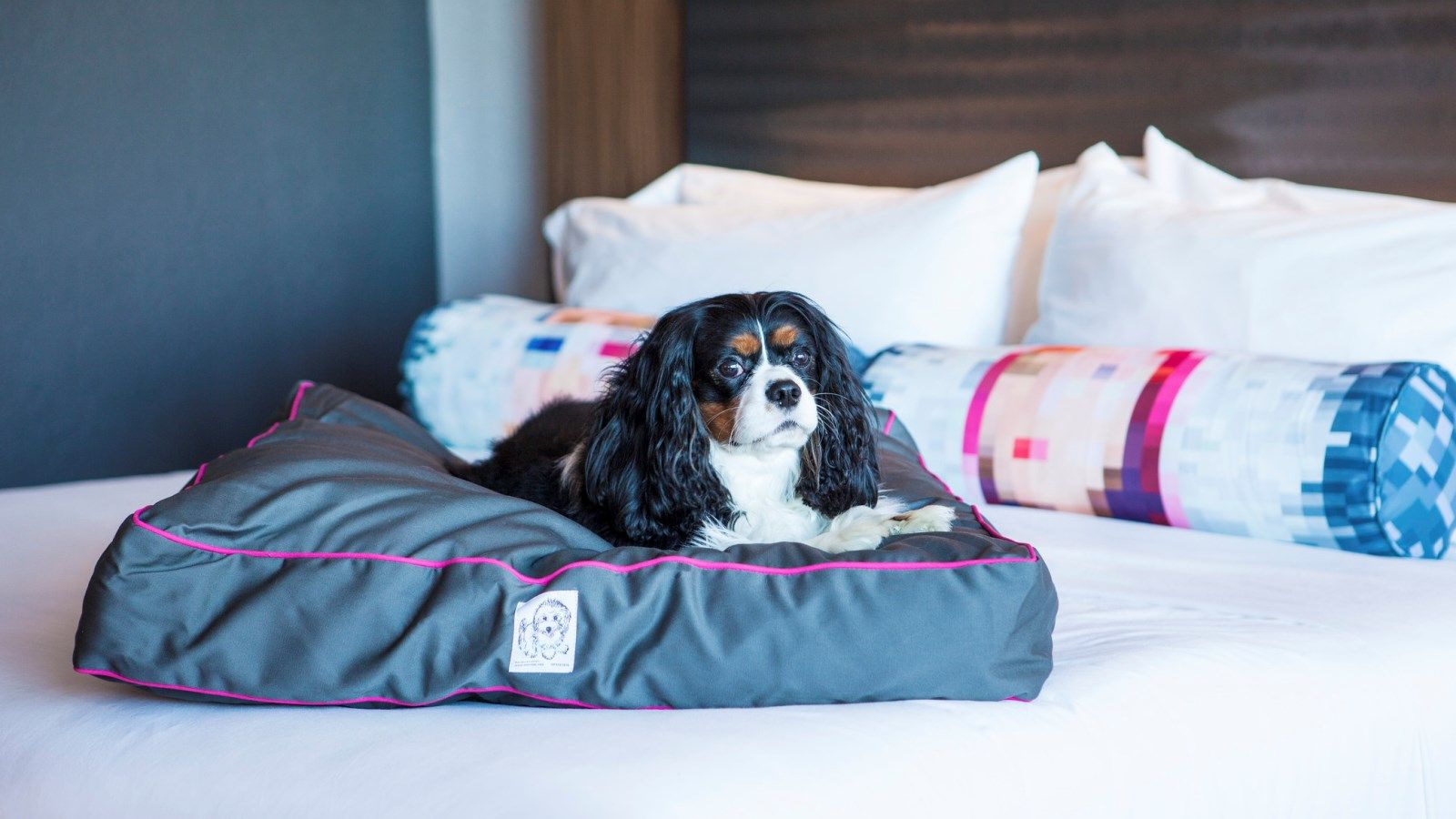 Pet Friendly Hotels in Miami